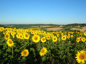 Charent rural France