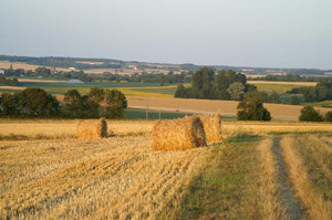 Cornfields Charente region France